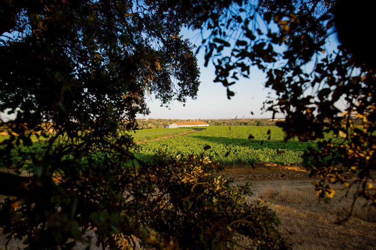 vinho maroteira portugal vinha